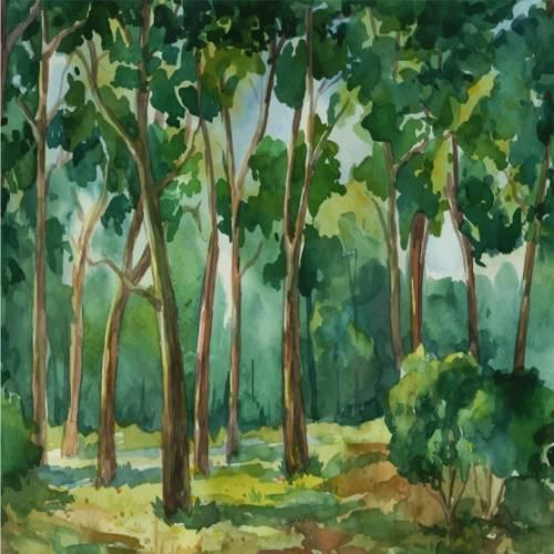 Natur 4146